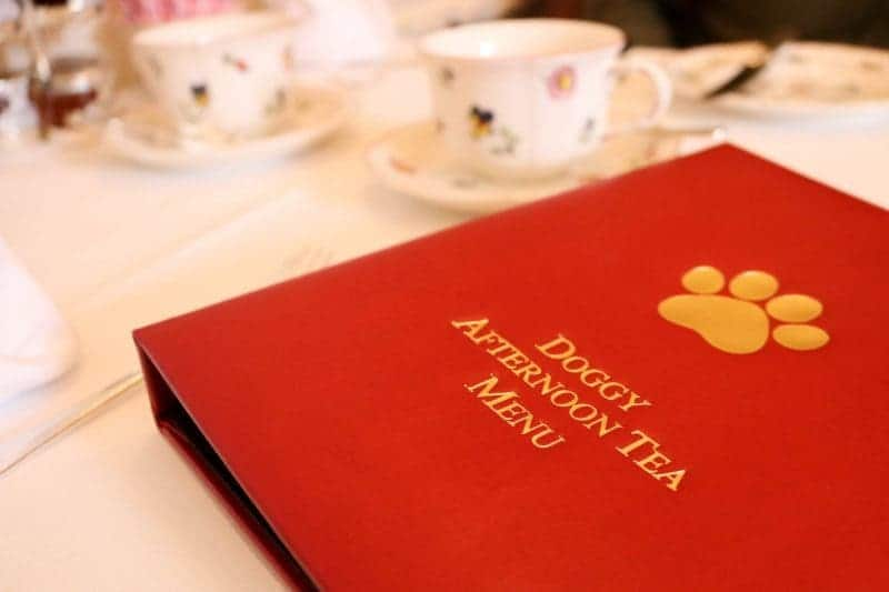 Doggy Afternoon Tea at Egerton House Hotel