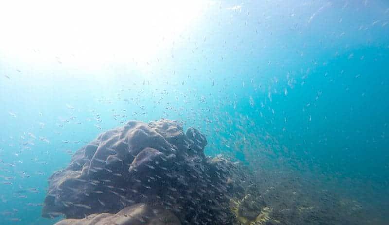 snorkelling surin islands thailand