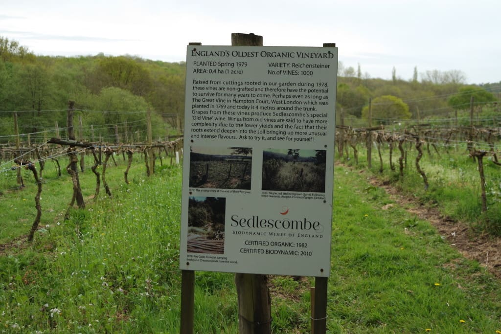 Sedlescombe Organic Vineyard  east sussex wine