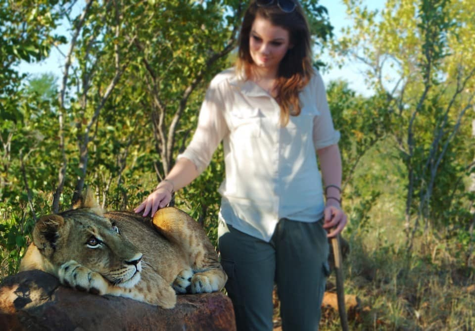 a lion encounter in zimbabwe