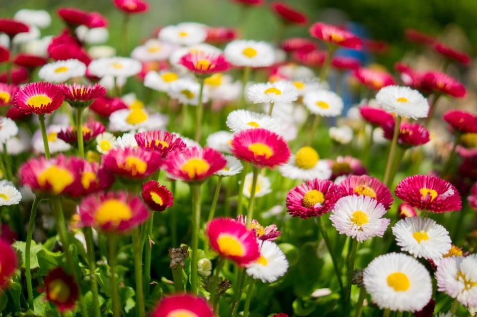 Chelsea flower show garden colorful